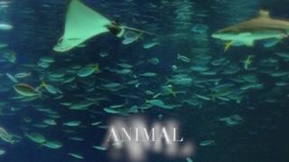 animal.png