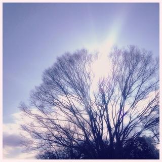 image-a8392.jpg